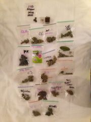 strains Cannabis Cup Amsterdam
