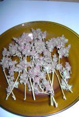 Colheita Clone Alporquia. New Purple Power.