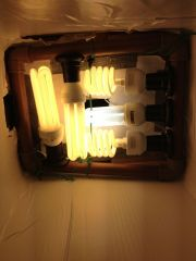 lampadas flora