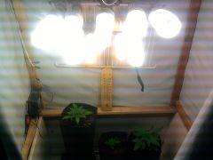335wts de luzes 23 dias