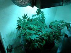geral grow2