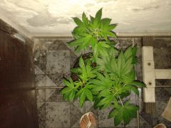 Planta #3 de cima