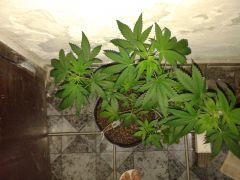 Planta #2 cima
