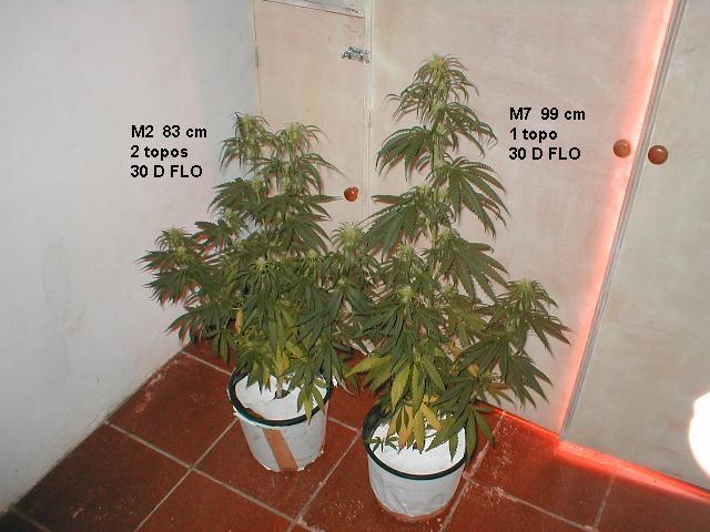 M2 M7 30D FLO