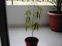 Grow1-7.jpg