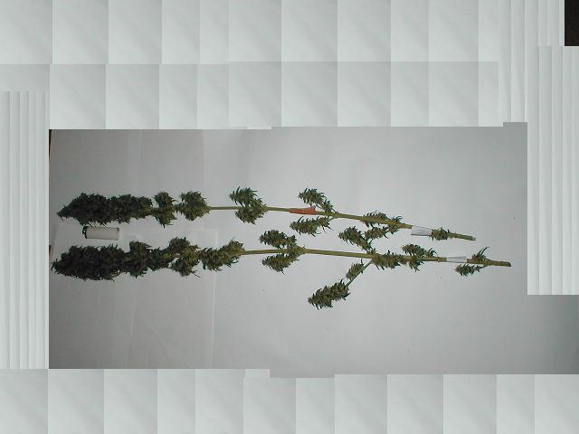 M5 colhida