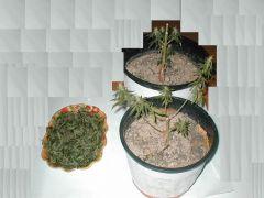 folhas e parideiras