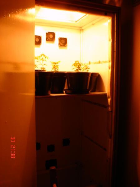 gallery_18514_416_1120174825.jpg
