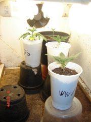 vegetativo 09.10.07
