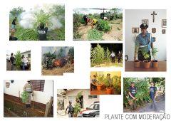 plante com moderaçao