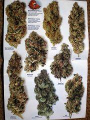 Algumas variedades