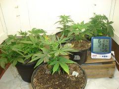 Dia 18 08 - plantas em flora