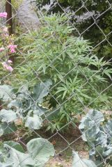 2 planta 3