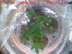 clonespote2(16-06-10).jpg