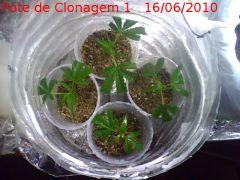 clonespote1(16-06-10).jpg