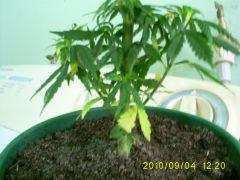 growzone 04.09.10.JPG