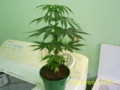 growzone 04.09.10 (1).JPG