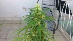 growzone 18.11.10.JPG