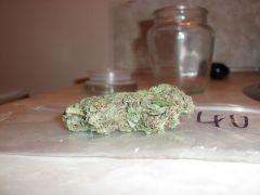 Organic Purple Kush