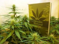 Cannabis Medicinal - Introdução ao Cultivo Indoor