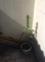 Plantae3