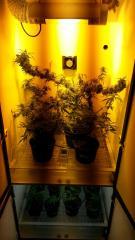 Cabine 2 flora HPS