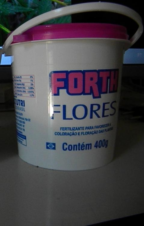 forth flores.JPG