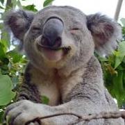 Koala_MTB