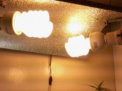 iluminação + inçetiçida azamax