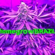 homegrowBRAZIL
