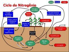 57b314c3717bc-nitrognio8.jpg
