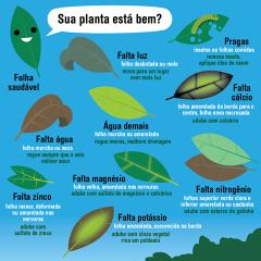 folhas.png