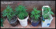 Plantinhas de 1 mês