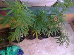 Plantas_do_Garga.png