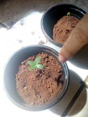 Grow simples e barato