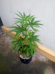 JANDIRA 02