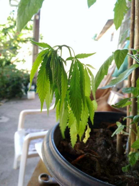 planta3.jpg