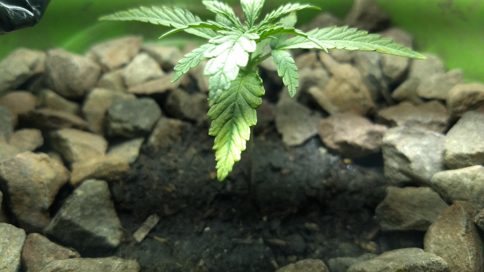 Meu Grow