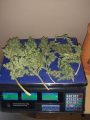 90 gramas úmido