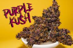 Purple-Buddah-Kush-32.jpg