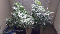 Primeiras plantas  ever