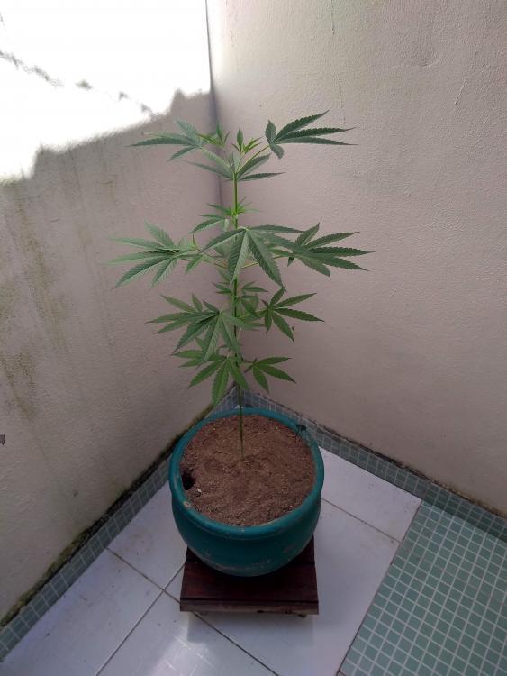 planta.jpeg2.jpg
