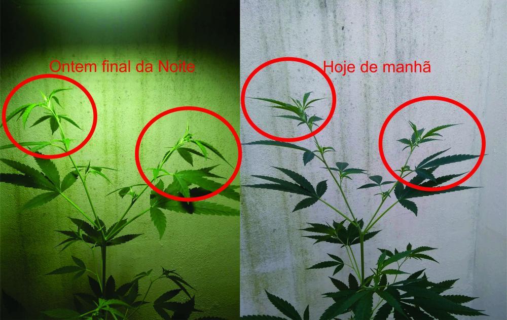 Planta 7.jpg