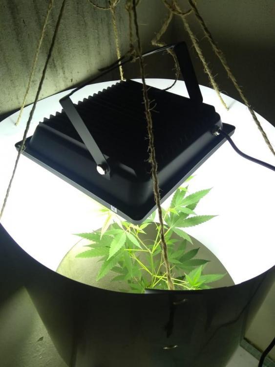luz planta2.jpeg