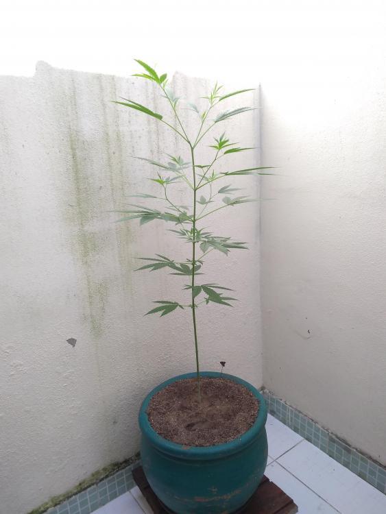 planta 4.jpg