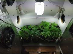 grow vega