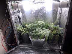 pc grow