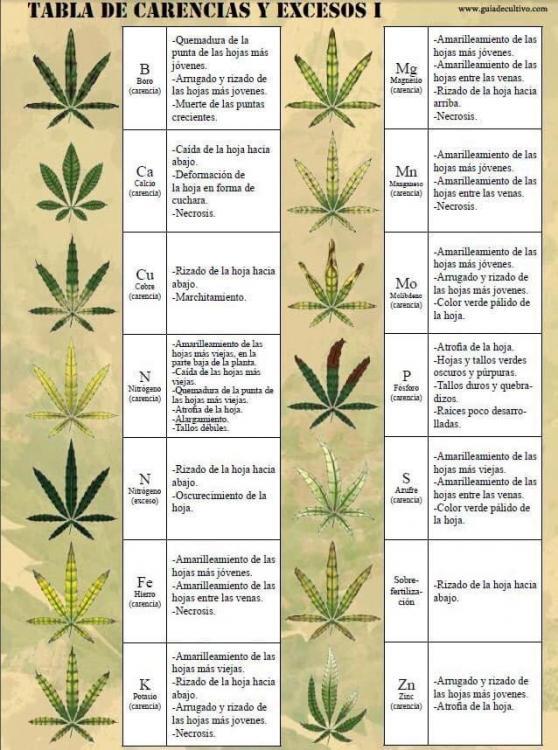 sobrefertilizacion-en-cultivos-de-marihuana-tabla-carencias.jpg