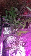 Cultivando RS