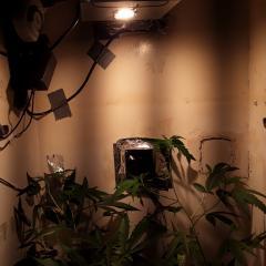 grow vega com nova luz.jpg